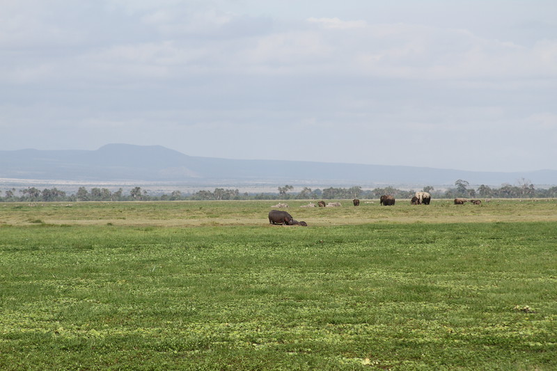 Kenya 2019 #2 848.JPG