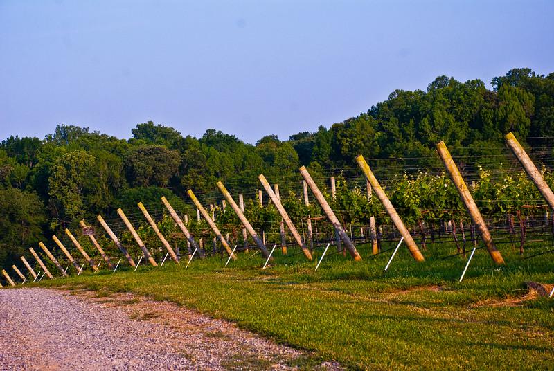 Childress Winery Lexington NC (13 of 16).jpg