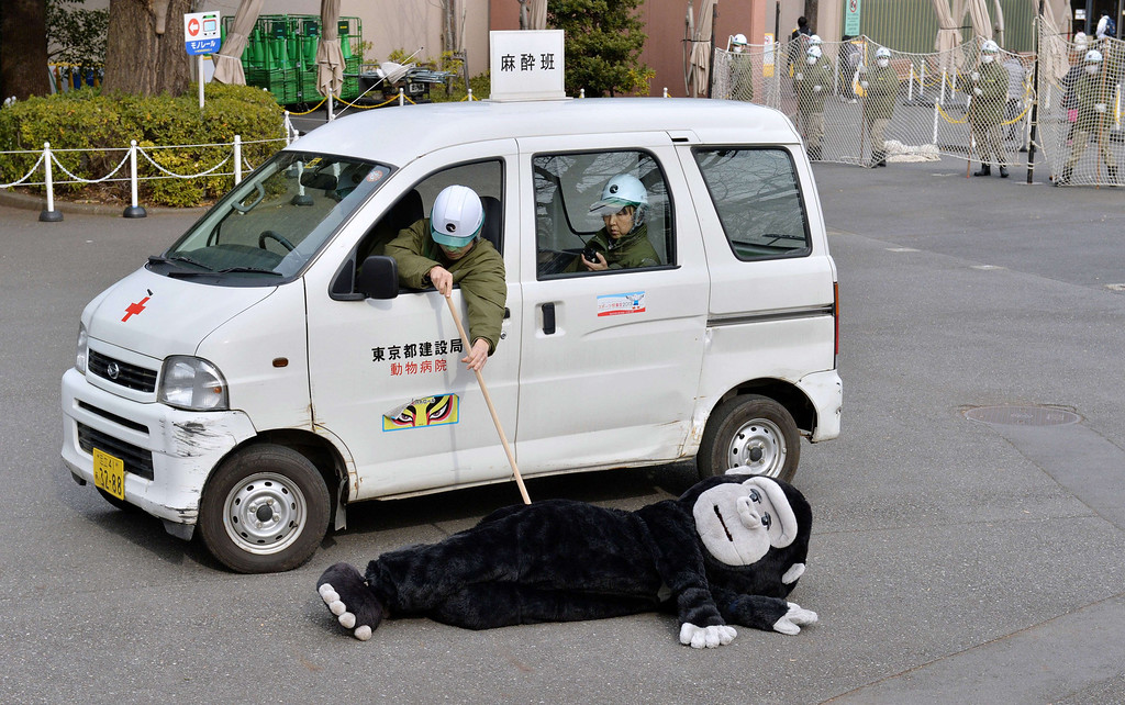 . Zookeepers check a an animal keeper dressed in a gorilla costume during a drill to practice what to do in the event of an animal escape at the Ueno zoo in Tokyo on February 6, 2014. About 70 zookeepers participated in the annual drill.     AFP PHOTO / KAZUHIRO NOGI/AFP/Getty Images