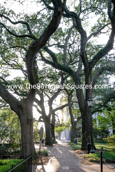 Savannah Landscapes