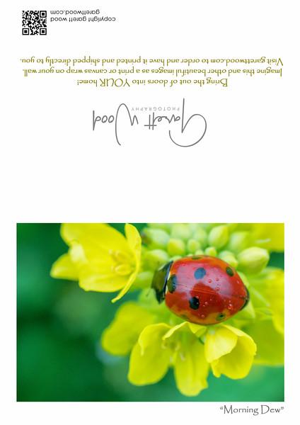 GC_Ladybug_5x7_Full Size.jpg