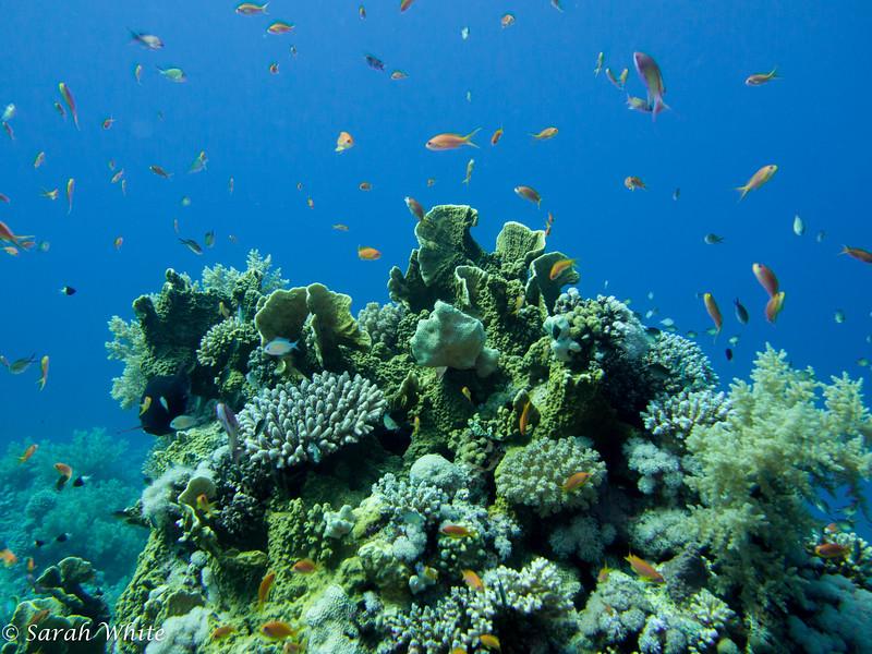141110_Sharm2014_005.jpg