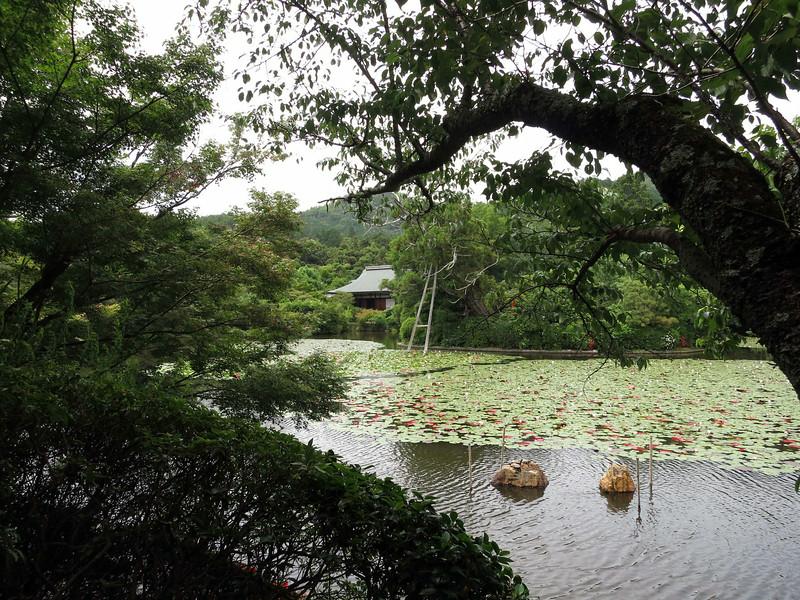 1985 Ryoanji Temple, Kyoto, lily pond.jpg