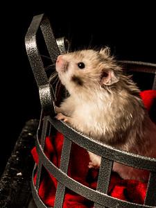 Carla Pug & Hamster