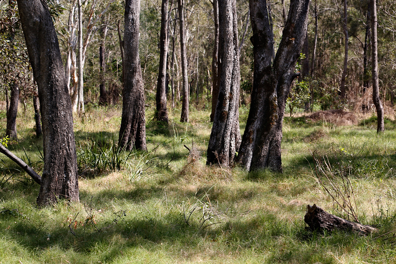 Boondall Wetlands Reserve #2.jpg