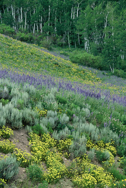 Crested Butte Wildflowers
