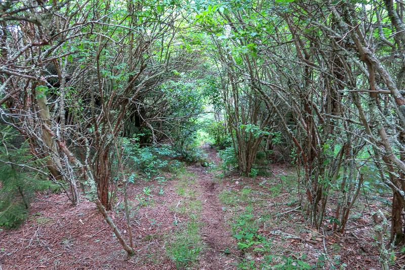 Green Mountain Trail -- 5,880'