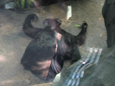 Zoo zu Valentine