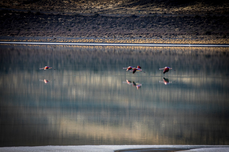 Flamingos outside TdP-7.jpg