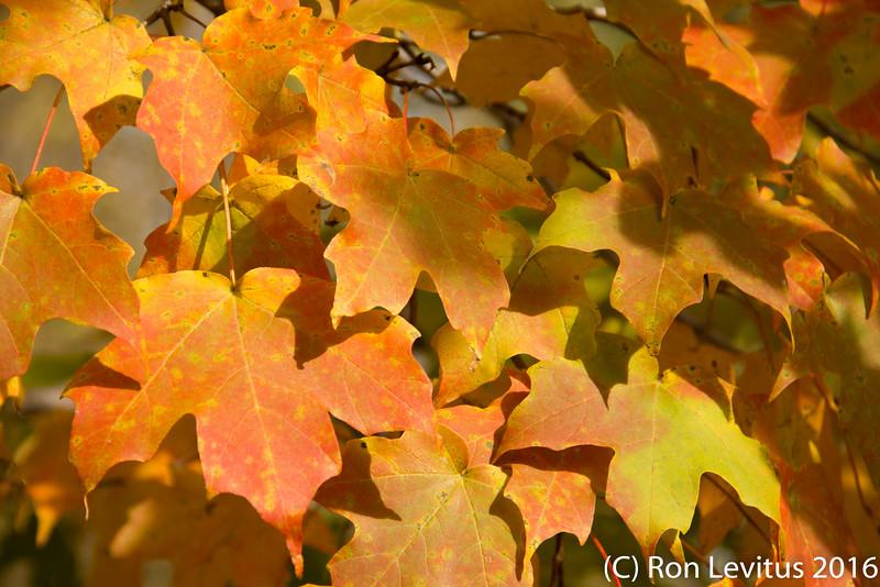 Fall Colors-3.jpg