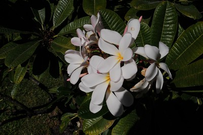A Walk at A-Bay,  Waikola Beach Resort