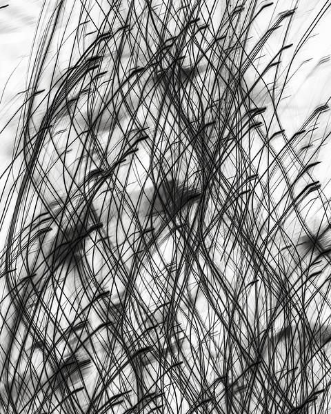 Nerve series no. 8