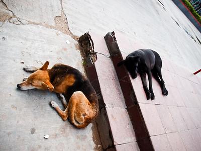 Jaipur, India - 8/7/2011