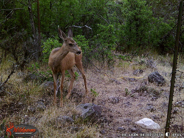 Indianola Trail Cam July-August 2018