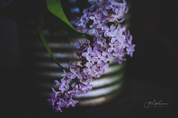 Spring in My Garden