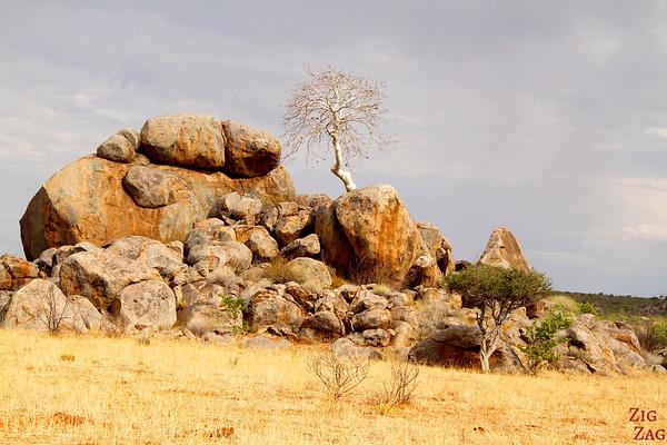 WHite tree Damaraland, namibia photo 1