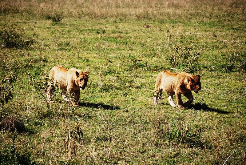 Ngorongoro (70).JPG