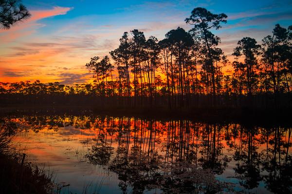 121717_Everglades