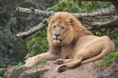 Zoo Animals- Auckland Zoo