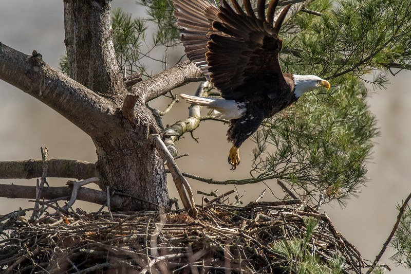 ulster-eagle-104.jpg