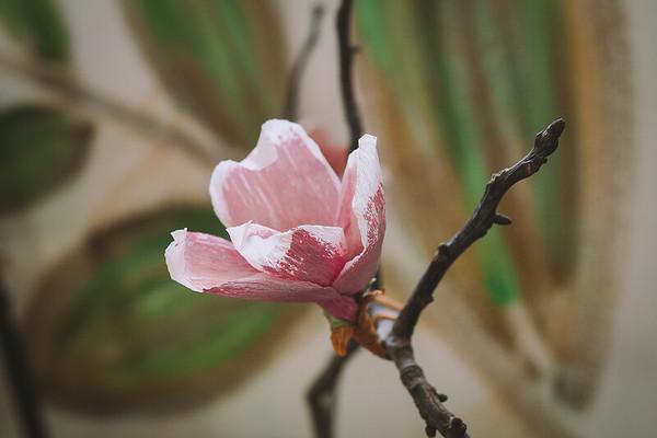 Tutorial 9 - Magnolia