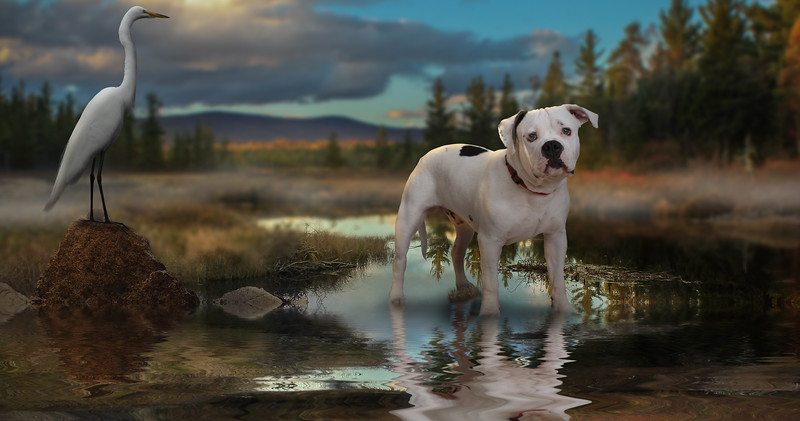 dog-lake-3.jpg