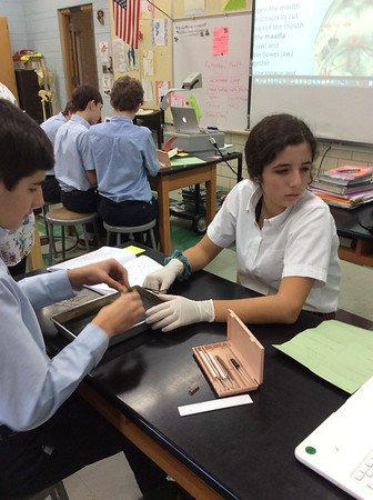 8th Grade Frog Dissections