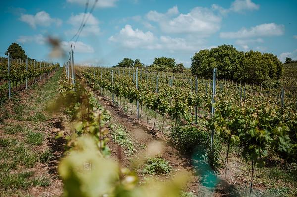 Vinařství Kněží hora :: vinohrady 2020