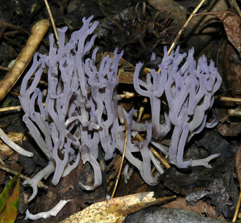 Mycology 029.jpg
