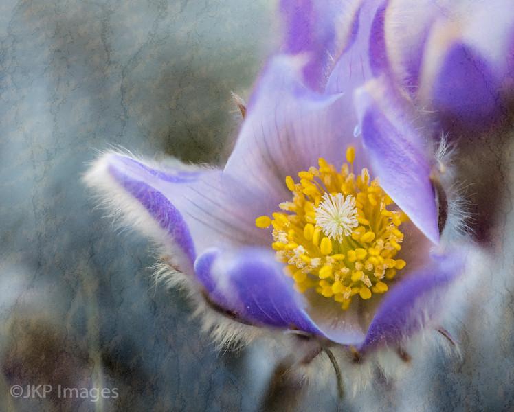 ThePhotoFrontier_ExpeditionTextures_WyomingIcons-25-Edit.jpg