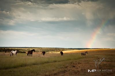 South West Colorado 2011