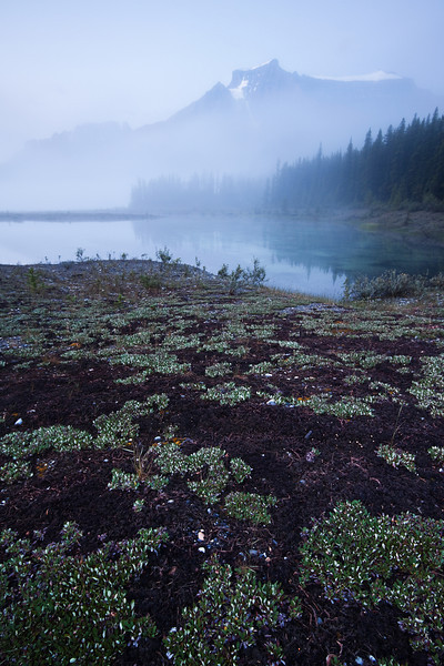 Graveyard Flats, Banff National Park - Alberta, Canada