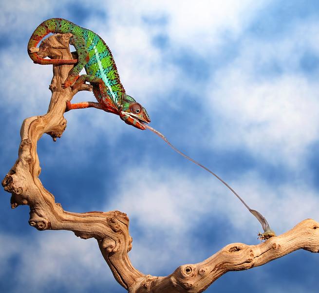 Mantis Dinner.jpg