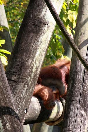 Thompson & Company Zoo Day