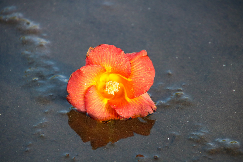 orange flower with water drops at the beach in the sand