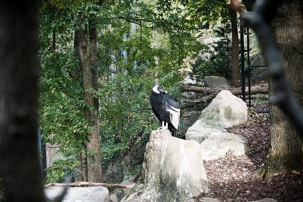 Cincinnati Zoo;  10/30/18