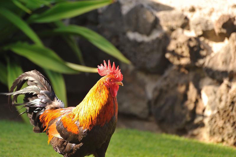 Kauai_004_1.jpg
