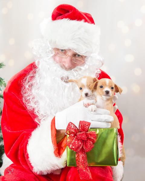 Miss Winkles Pet  Photos with Santa 2015
