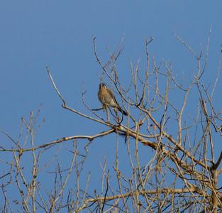 Nevada/Utah Birds 2013