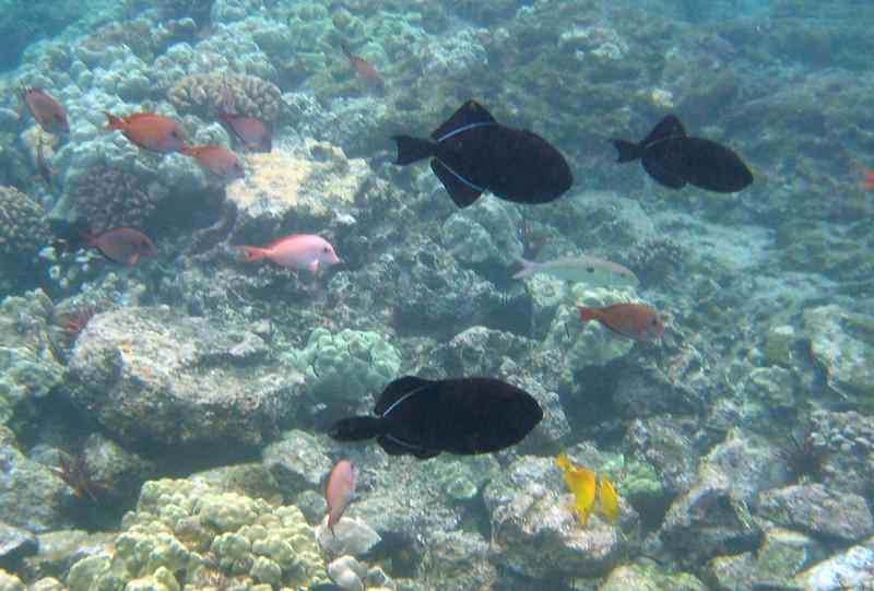 502- 20080416- Hawaii 20-Snorkelling IMG_0748.jpg