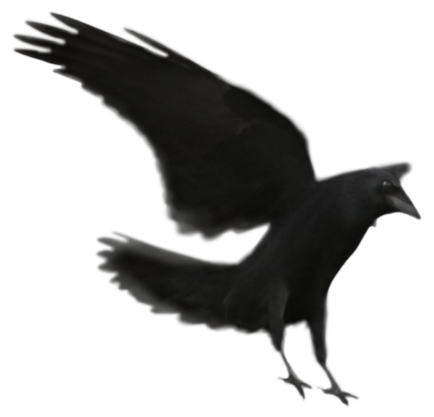Raven 20.png