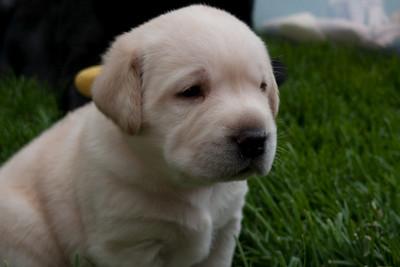 Lexi puppies June 6