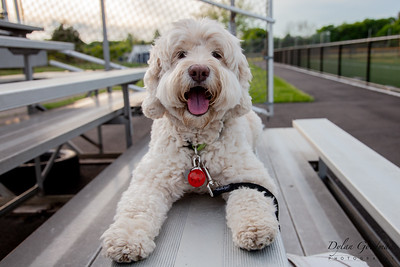 Riggins (Dog) Photoshoot - May 27, 2020