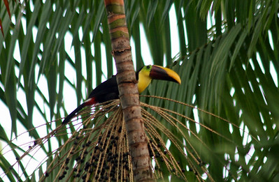 Dominical, South Pacific,  Villas Rio Mar