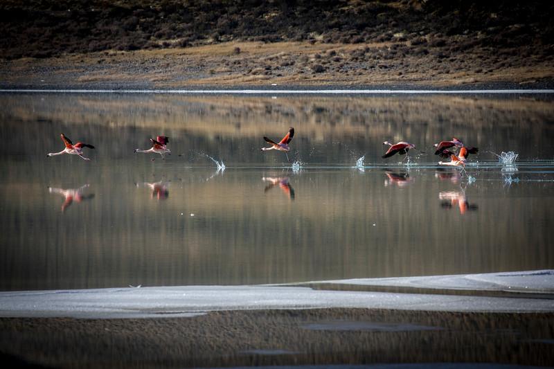 Flamingos outside TdP-6.jpg