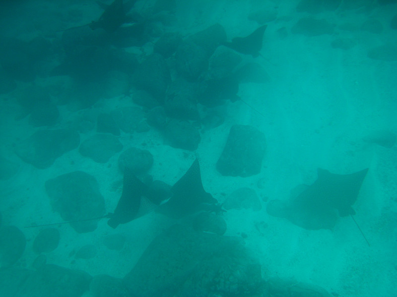 Diving in the Galapagos (381 of 392)