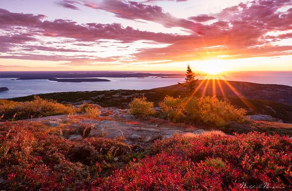 Morning Glory in Acadia
