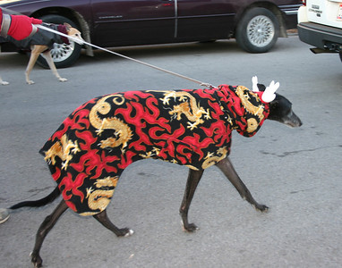 Greyhounds in 2008 Thanksgiving Parade