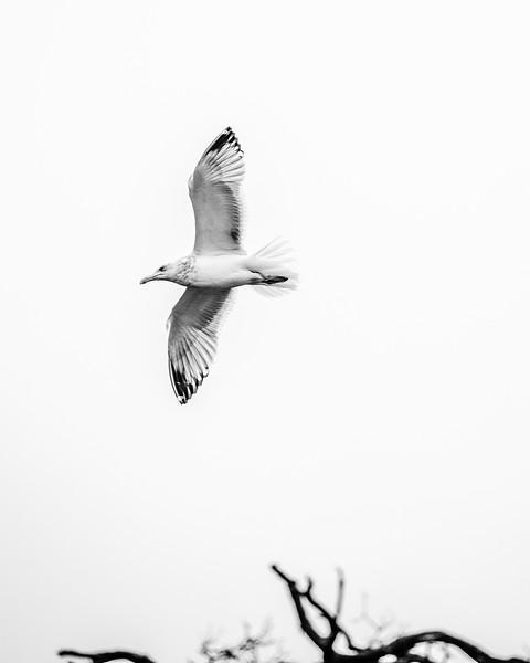 seagul-3.jpg