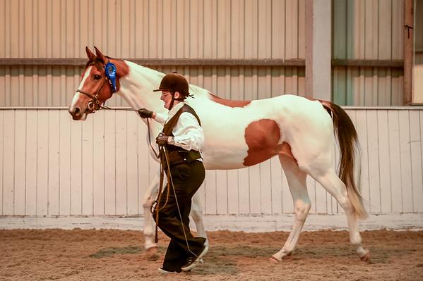 Class 12 (Pure Saddlebreds - Junior)